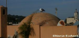 Kashbah rooftop